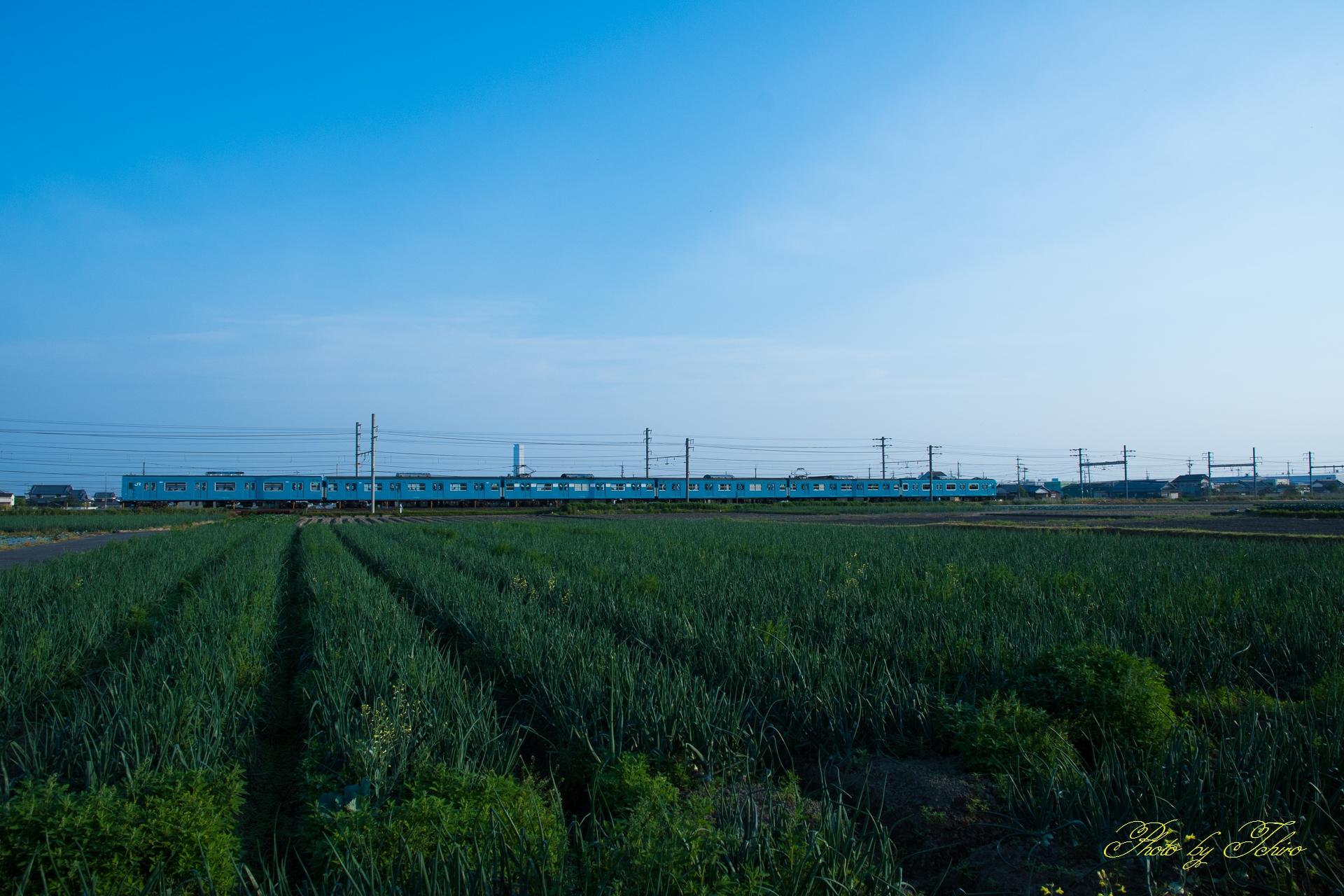 玉ねぎ畑と103系