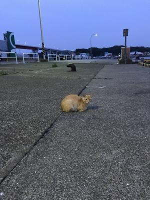 いつもの猫