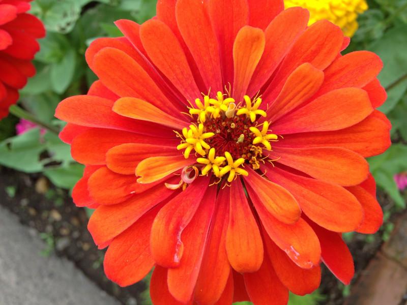 みちのく公園オレンジの花