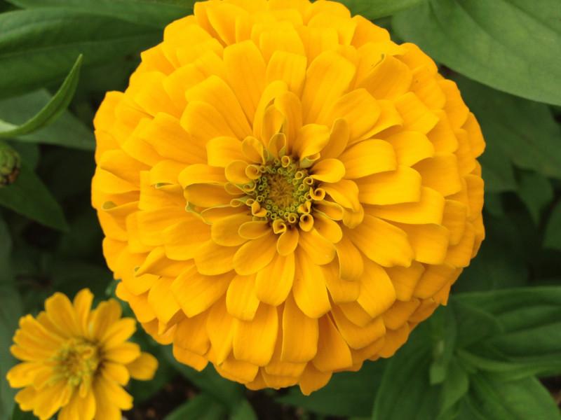 みちのく公園黄色の花