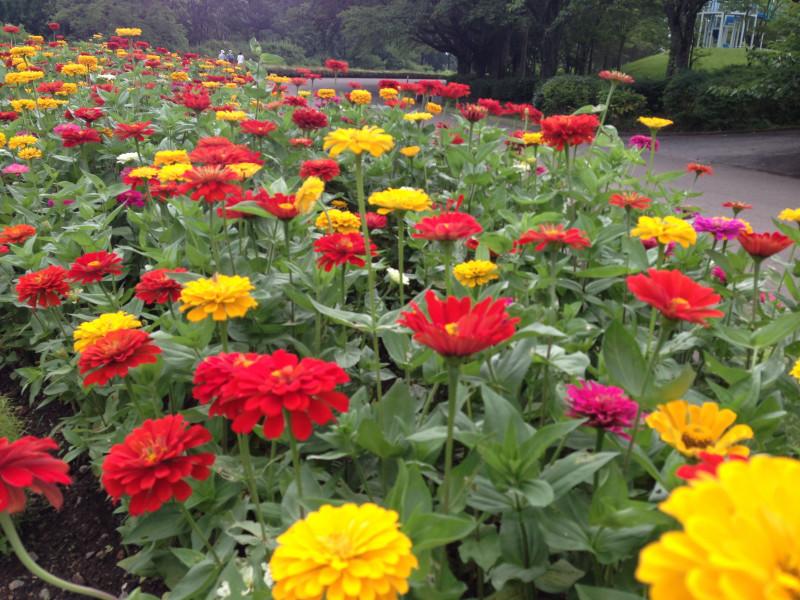 みちのく公園花畑