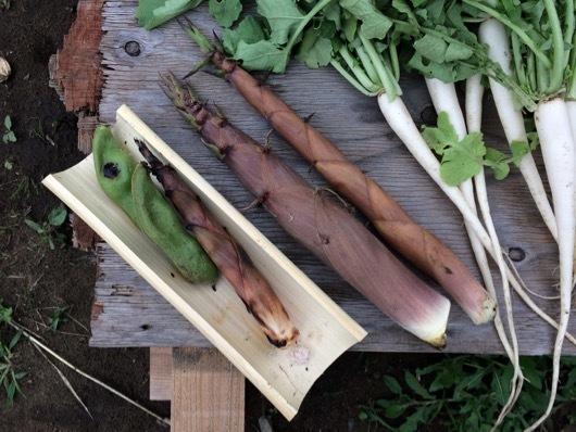 春の味覚 そら豆と淡竹(はちく)