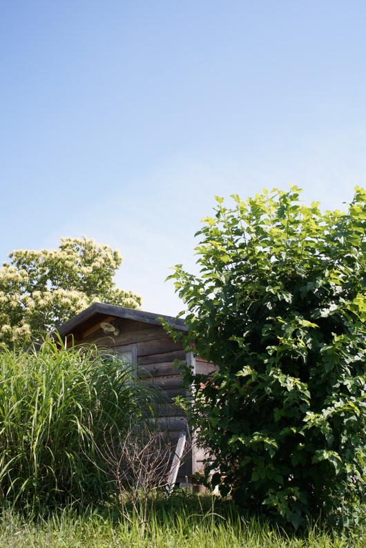 夏空と小屋