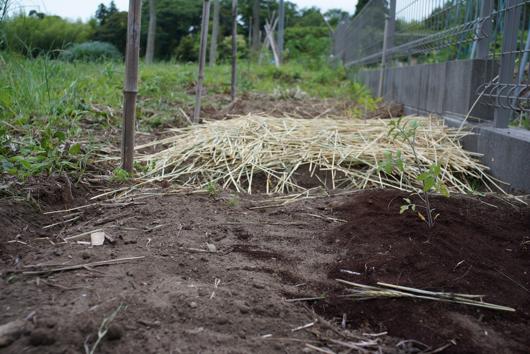 コーヒーの残渣、麦藁、雑草堆肥の実験区画