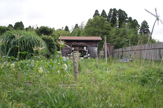 雑草が生い繁る畑