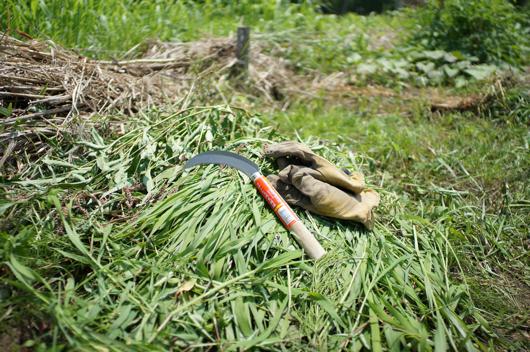 ノコギリ鎌で草刈り