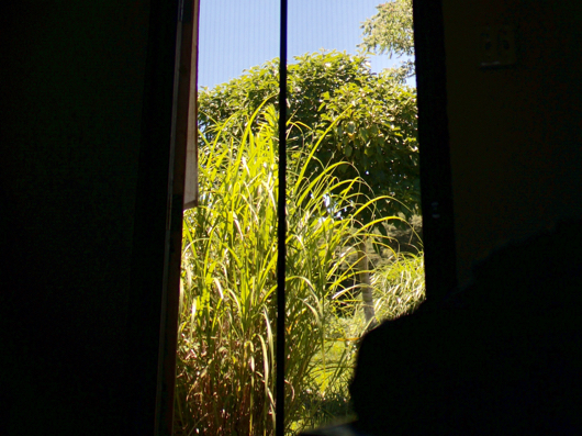お昼寝 小屋からの眺め