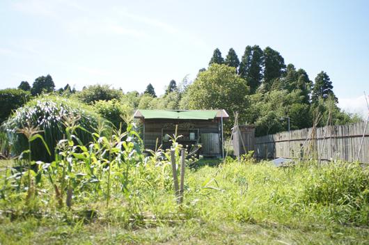 夏の房総フィールド 畑と小屋