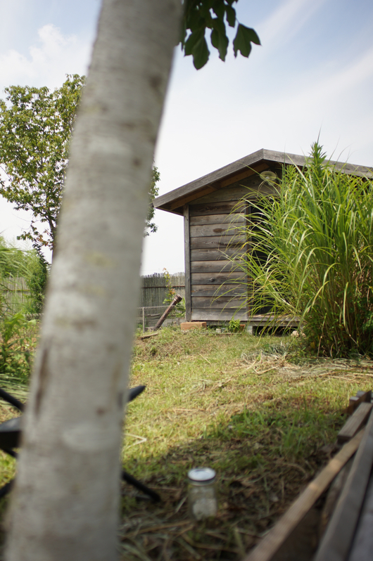 房総フィールド夏の朝、夏の小屋