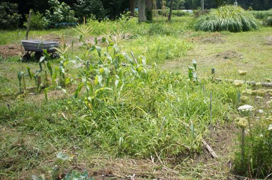 房総フィールドガーデン夏の雑草