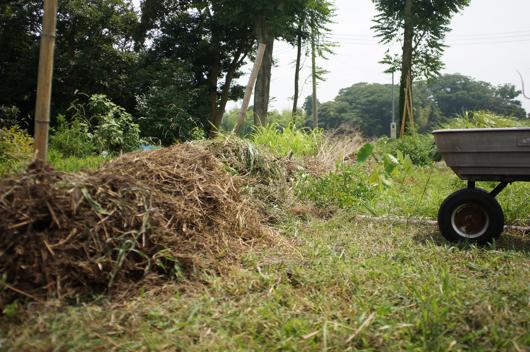 夏の雑草堆肥
