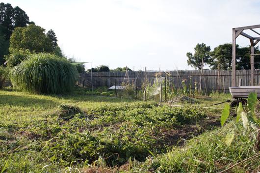 ストロベリーフィールドの草刈りafter