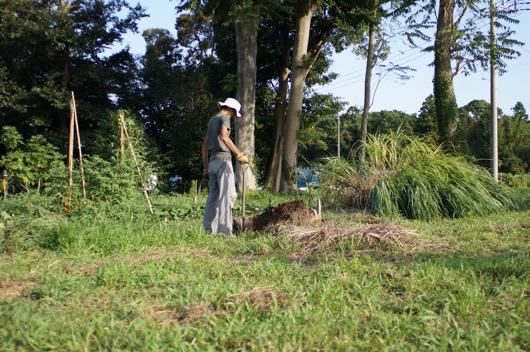 ジャガイモ畑拡張
