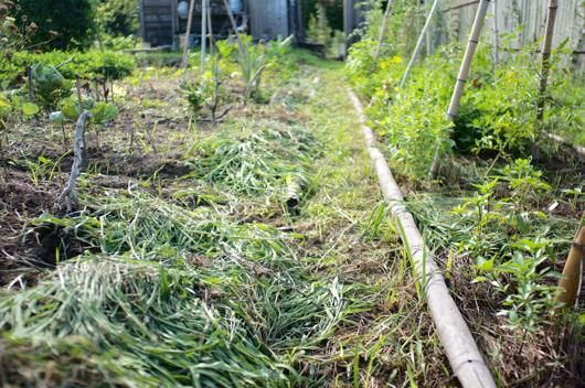 房総フィールドガーデン草むしり