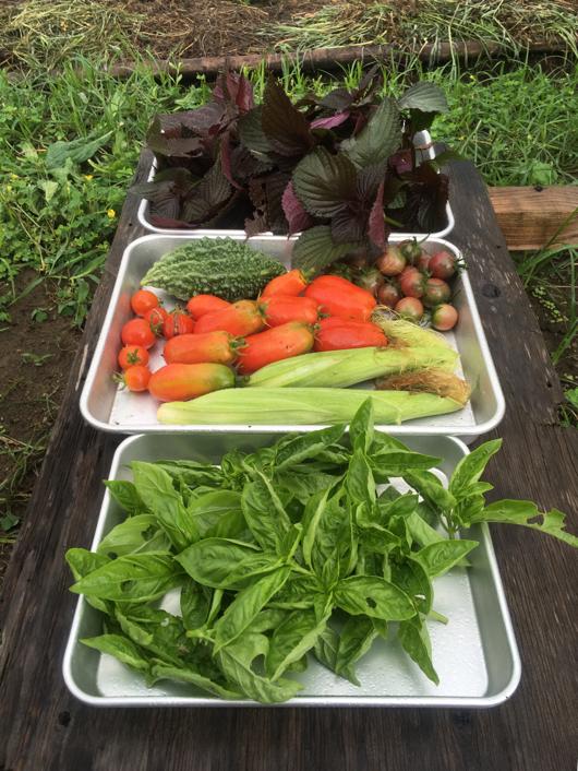 房総フィールドガーデン 夏の収穫祭り