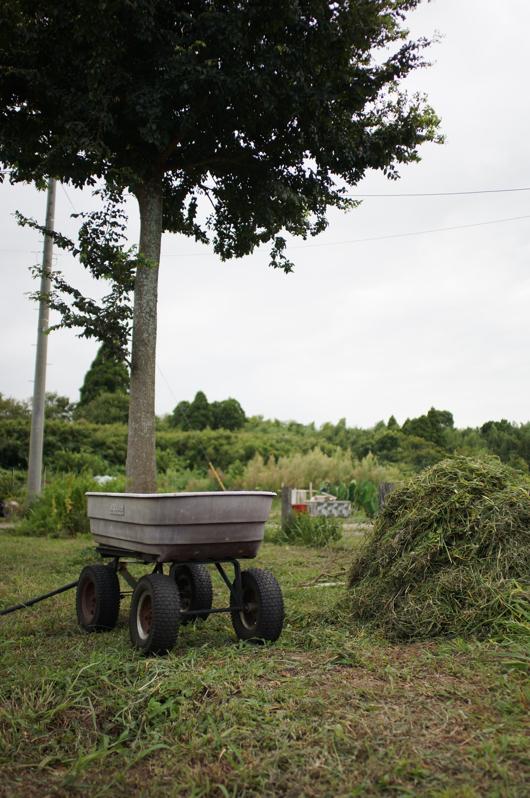 房総フィールドガーデン 雑草退避収穫