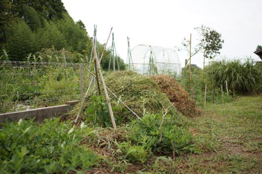 雑草堆肥新しい山