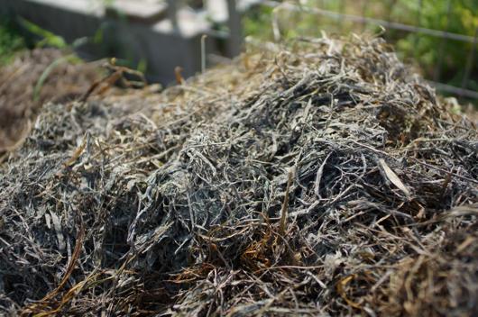 雑草堆肥 2週間経過 白いカビか菌類が分解を開始