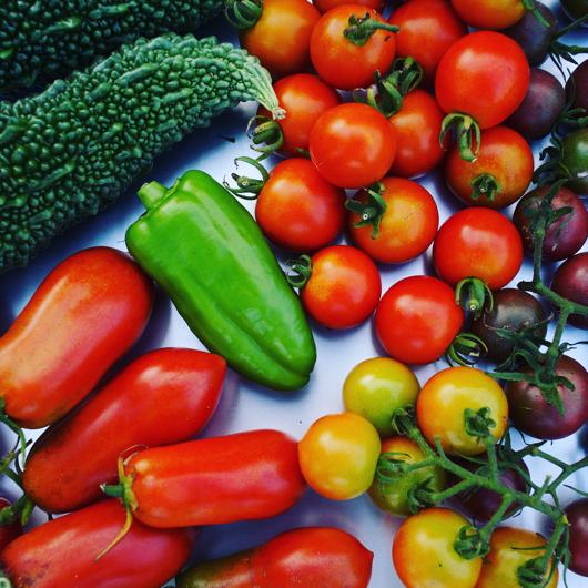 房総フィールド産夏野菜