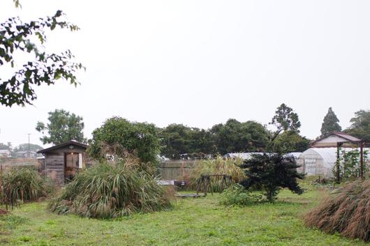 雨の房総フィールド
