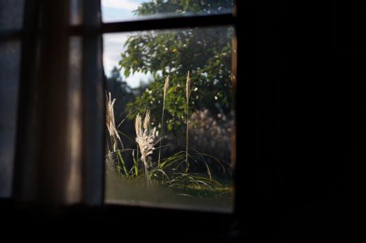 小屋から眺める朝の房総フィールド