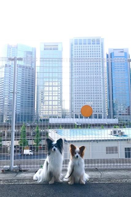 朝散歩 2017
