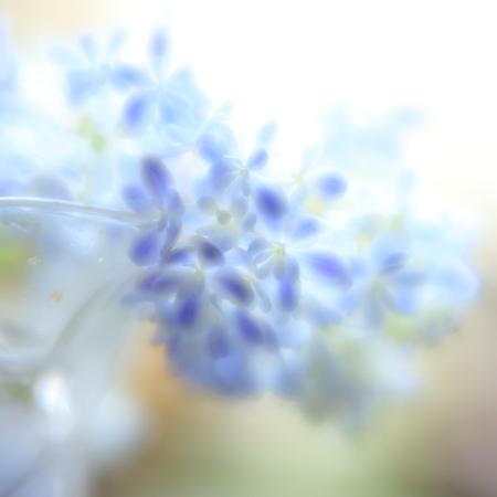 梅雨の花撮り 06/13/2017