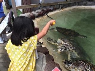 あわしまマリンマークウミガメ餌