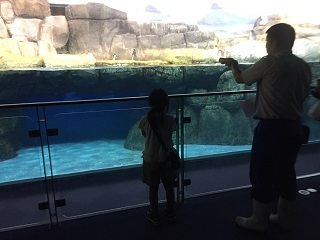 水族館お泊まりペンギン