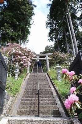 弁財天石楠花の丘・石段