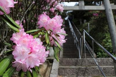 弁財天石楠花の丘・石段のシャクネゲ