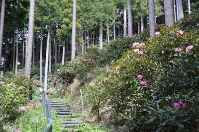 弁財天石楠花の丘7
