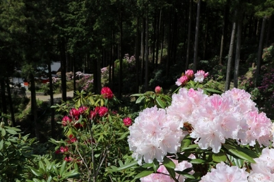 弁財天石楠花の丘10
