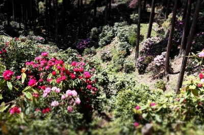 弁財天石楠花の丘11