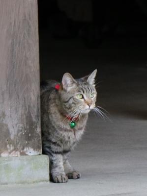立木観音の猫