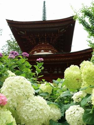 久米寺・多宝塔2