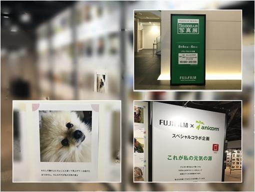 cats2_20170807193005fdd.jpg