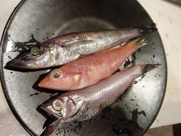 深海魚 0605