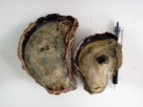 岩牡蠣 0612