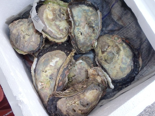 岩牡蠣 0711