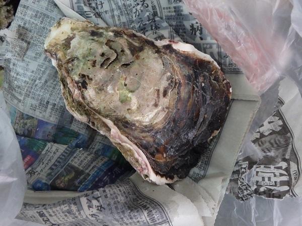 岩牡蠣 0724