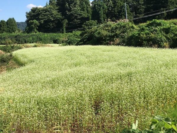2017-09-09 安塚そば畑