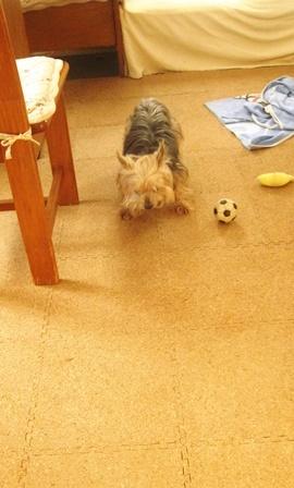 ボールで遊んでるよ・・・