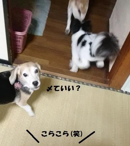 MOV_0343_000014.jpg
