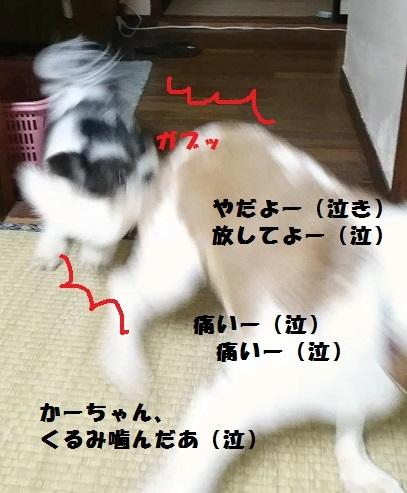 MOV_0343_000024.jpg