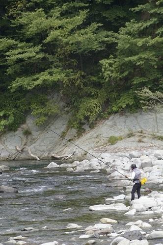 清流 赤石川の鮎釣り