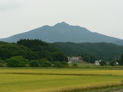 岩木山と黄金色の絨毯