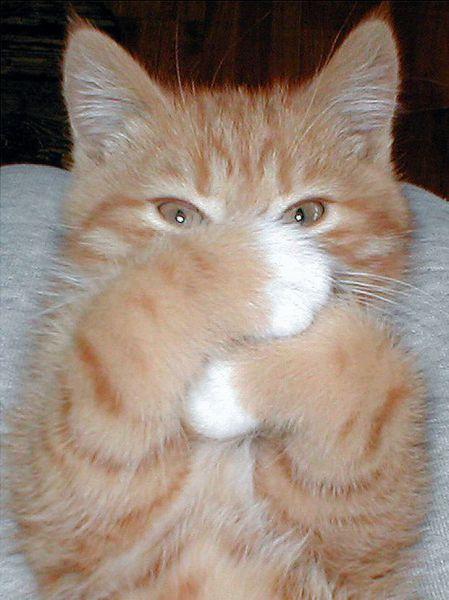 クサっ…猫