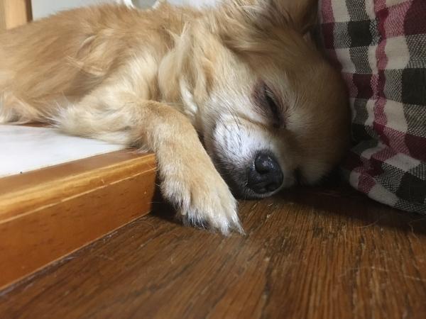 0809パンナ寝落ち