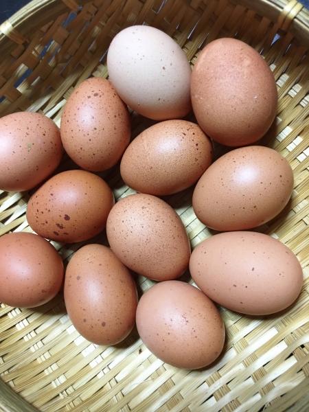 0920卵たち